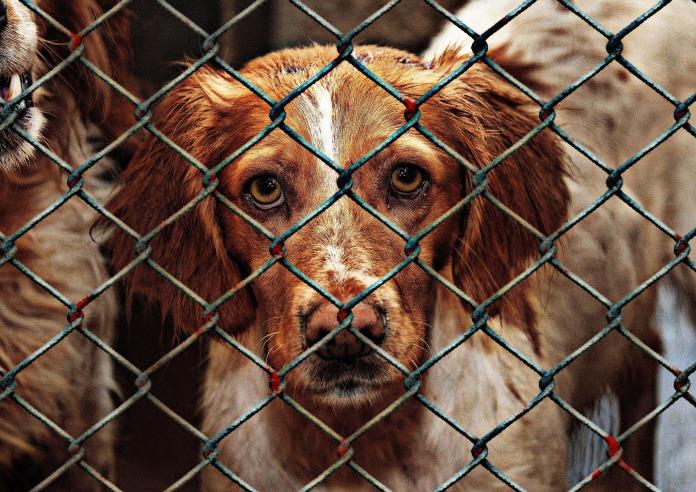 animal-welfare-1116205_1920.jpg